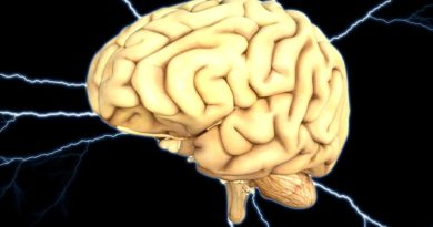 How brain constructs the world
